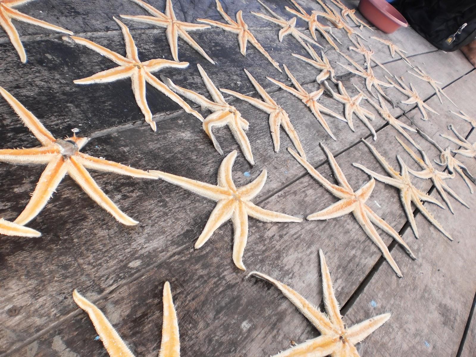 Chalet Terapung Persatuan Nelayan Kuala Segantang Garam Merbok Kuda Laut Kering  5 Biji Tapak Sulaiman Pancingan Kamihaisshhd Kids Seronok Lapakat Jemur Bagi Nak Balik Spray Cat Buat Deko Gitu